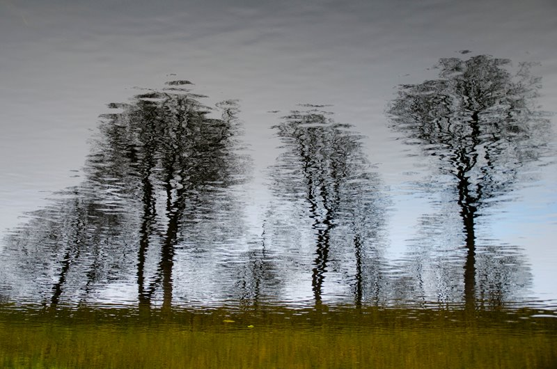 Reflection of trees in Copenhagen